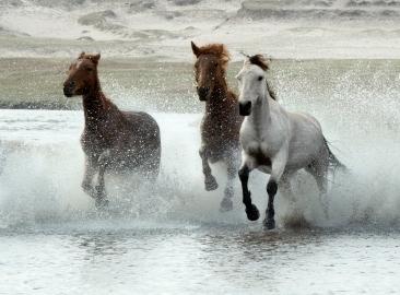 Stream_Gallop