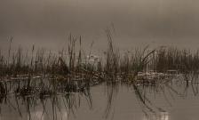Winter Morn, Lake Te Ko Utu