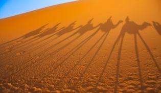 a-Camel Train