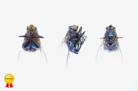 A-Housefly-Three-Ways