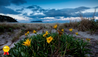 A-Landscape_Pauanui Dusk
