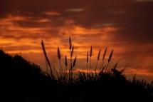 a-Raglan- sunset-5737