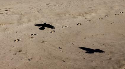 A-Shadow_Flight