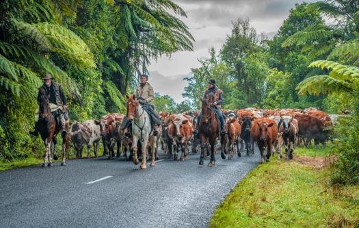 b-Cattle Drive_