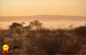 b-Morning-Mist-in-Africa