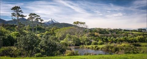 B-Taranaki Bushland