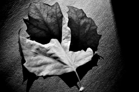 C-leaf-light-7583