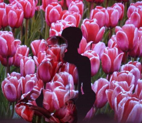c-Poppy-in-the-tulips