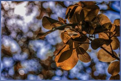 b-Beyond the leaves-