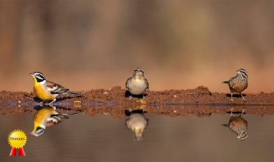 b-Birds-of-Africa