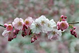 B-Blooming-Beautiful
