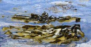 b-seaweed-salad