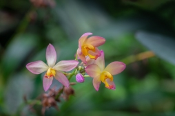 b-tropical_orchid