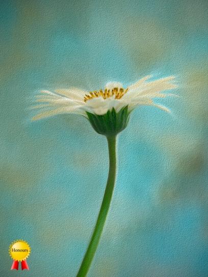 a-floral