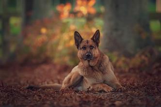 A-Shades_of_Autumn