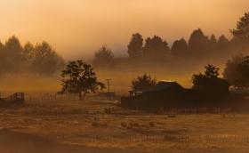 b-A Golden Morning