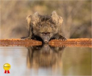 b-Baboon-at-the-Waterhole