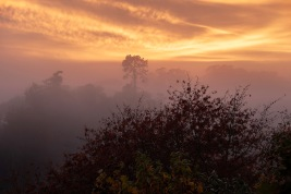b-Canopies_above_the_Fog