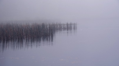 b-Reeds_in_the_Fog