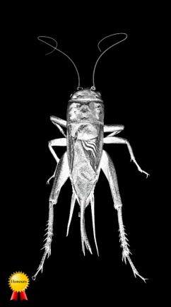A-Cricket