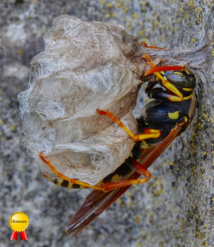 A-Paper-Wasp
