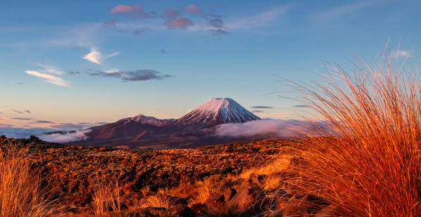 a-Sunset Kissed Tussock with Mount Ngauruhoe