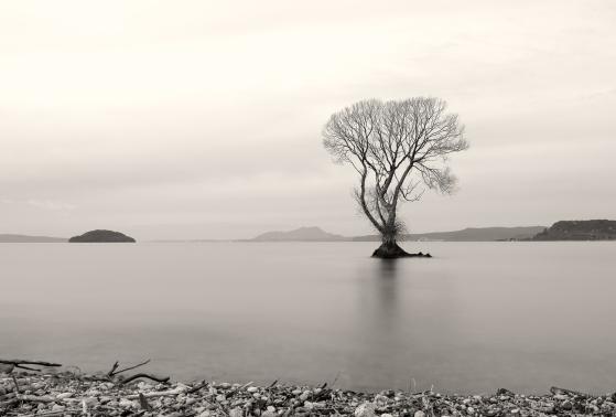 B-A_Tree