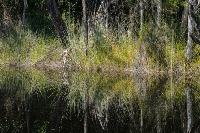 b-Mirrored Grasses_Noosa_Everglades