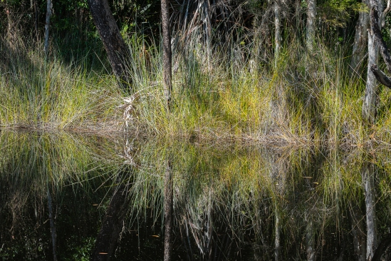 b-Mirrored Grasses_Noosa_Everglades
