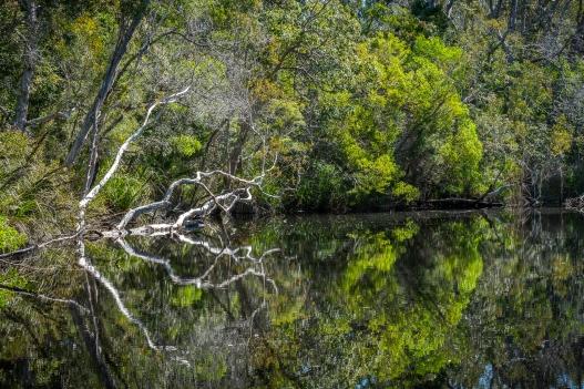 b-Reflections_Noosa_Everglades