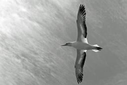 B-Spread those Wings