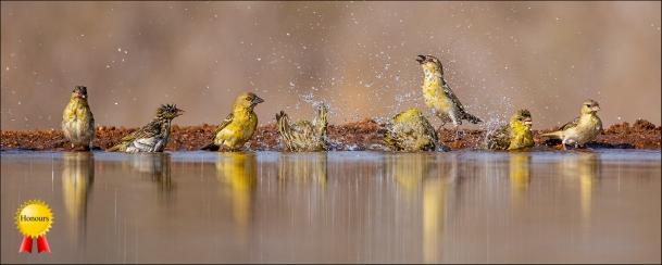 b-BathtimeHonours
