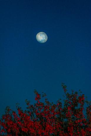 a-Blue Moon