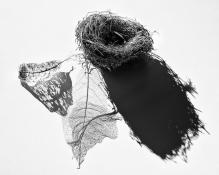 b-empty_nest