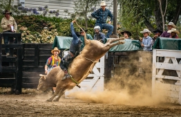 b-Riding the Steer