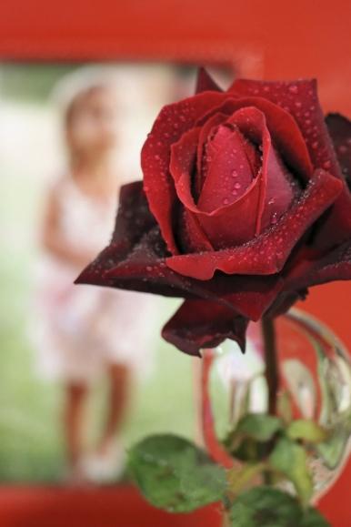 B-Rose of Love