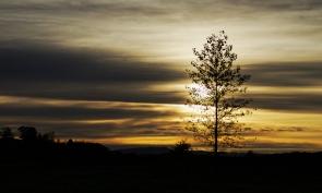 B-Sunrise-silhouette