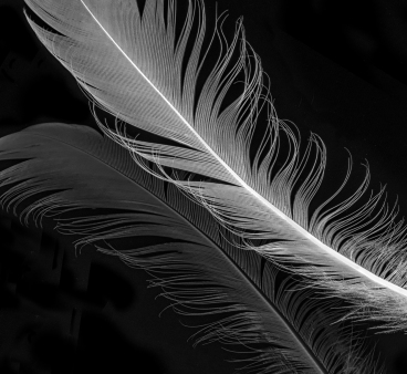 a-Feather light.Honours