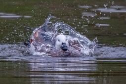 a-Splish Splash