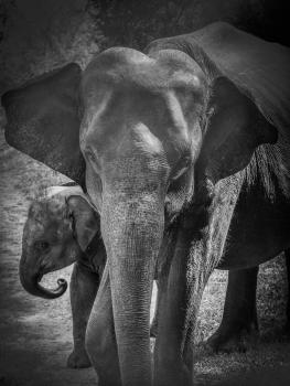 b-Mother_&_Baby_Sri_LankaHonours