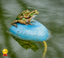 A-Froggy-Went-A-Courtin_Honours