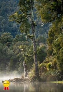 A-Morning Mist Lake Mapouriki._Honours