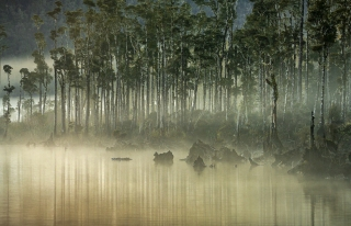 a-Morning mist Lake Wahapo.