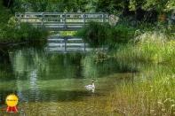 b-Lake_Alexandrina_Outlet_Honours
