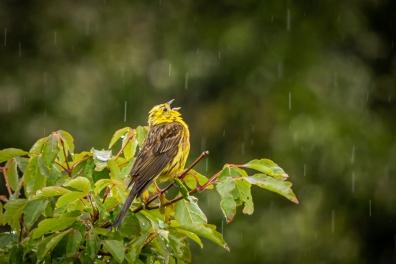 b-Singing_in_the_Rain