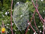 C-Misty-Web_Honours