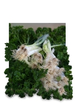 c-Parsley-and-Spring-Onions